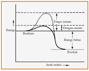 Image result for GRAFIK MENURUNKAN ENERGI PENGAKTIFAN