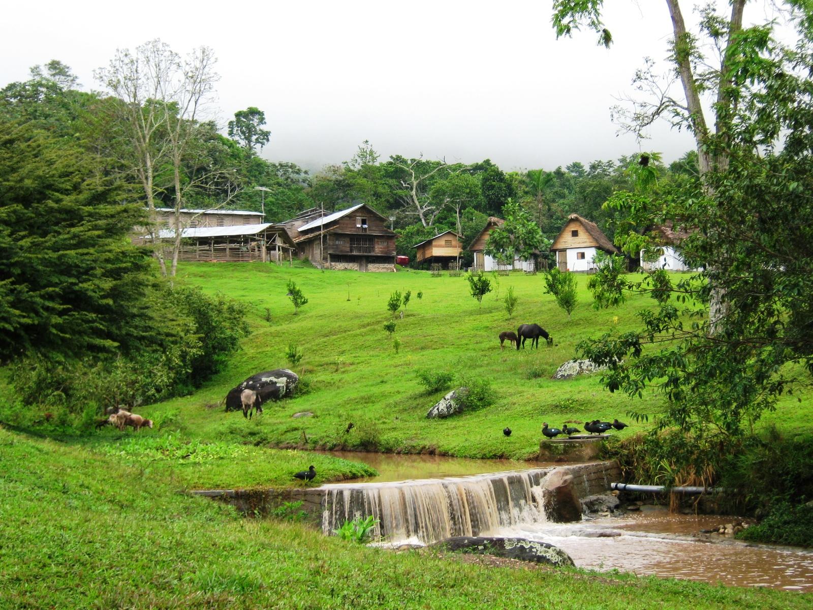 Plantas De Selva Alta: Turismo Y Cultura Amazónica: Provincia De Moyobamba