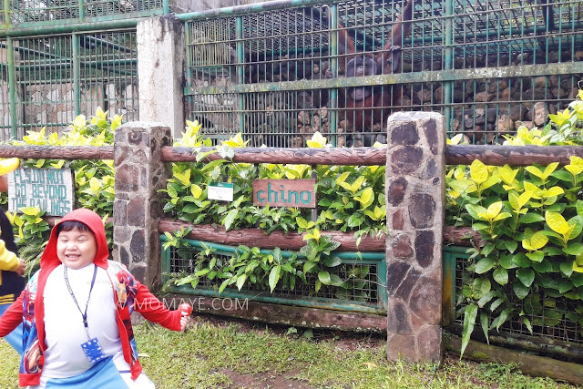 Animal Farm, Tagaytay Highlands, Summer Garden, animals, educational field trip