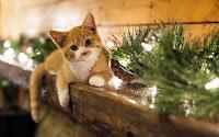 Birbirinden Güzel Farklı Kedi Resimleri