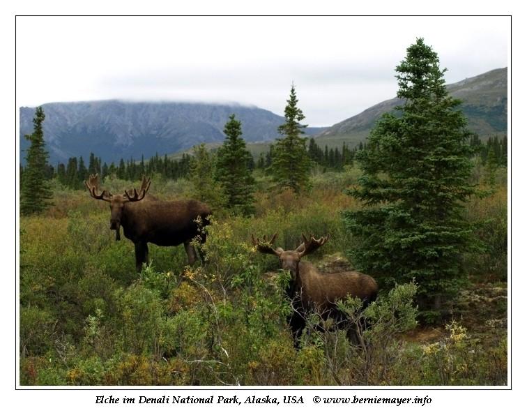 Reisebericht Alaska Woche 1