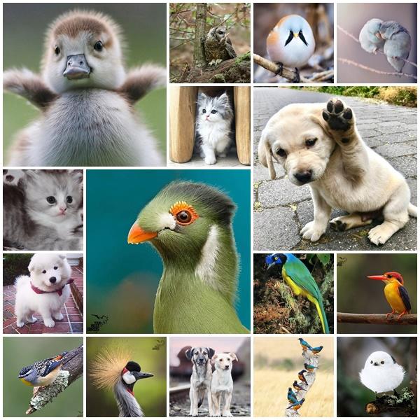 اجمل الصور  للطيور و الحيوانات  ( 40 صورة المجموعة الاولى )