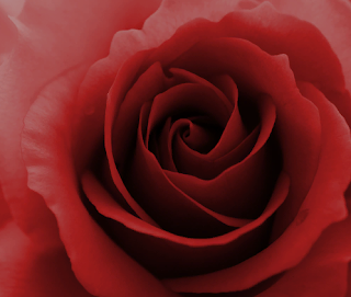 http://robamimi.biz/games/roses99/story1/story1.html