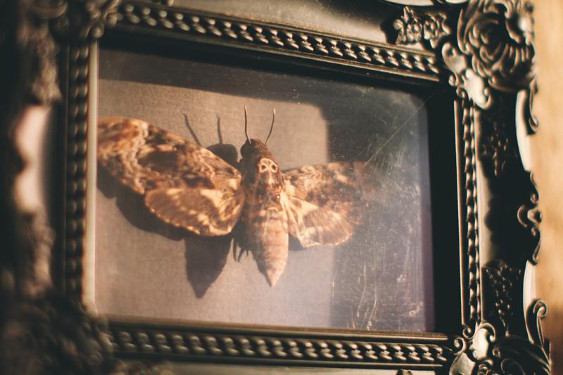 gallery wall art decor room sala decoração arte hawk moth mariposa