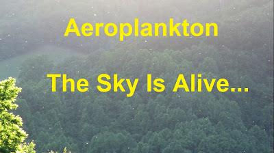 Aeroplankton -  Plankton In The Sky