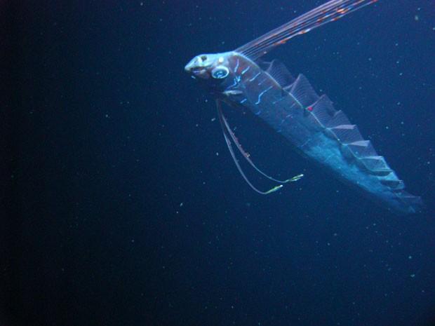 Serpente das Profundezas dos Mares no Golfo do México