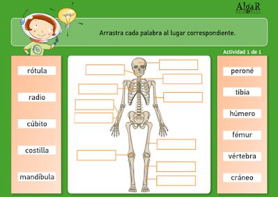 http://www.primerodecarlos.com/TERCERO_PRIMARIA/archivos/actividades_natura_tercero/5/4.swf