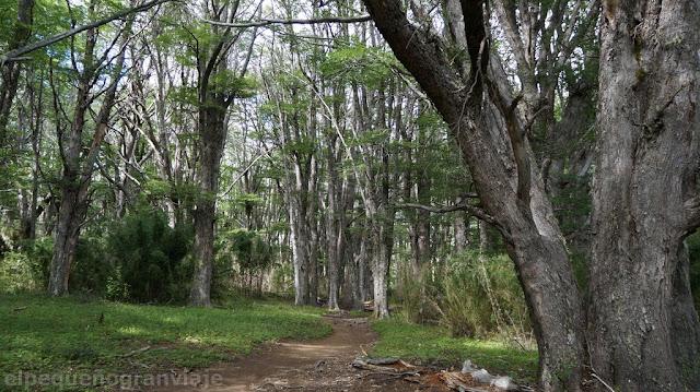 bosque, valle casa de piedra, bariloche, refugio, laguna jackob