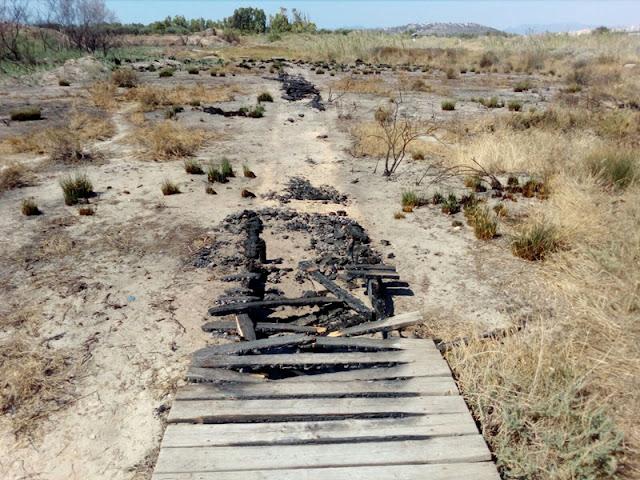 Incendi Parco Molentargius