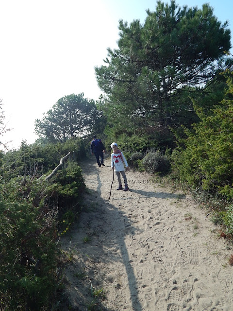 Giardino Botanico Litoraneo del Veneto: dune di sabbia