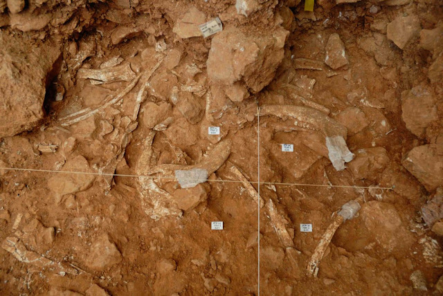 Oldest case of bison communal hunting found at Spain's Atapuerca site
