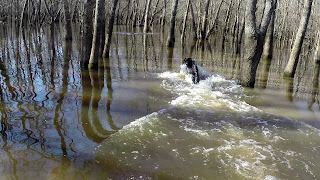 north texas duck hunting|north texas duck hunts|north texas retriever trainers