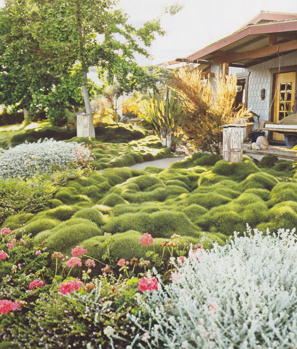 Thinking Outside The Boxwood
