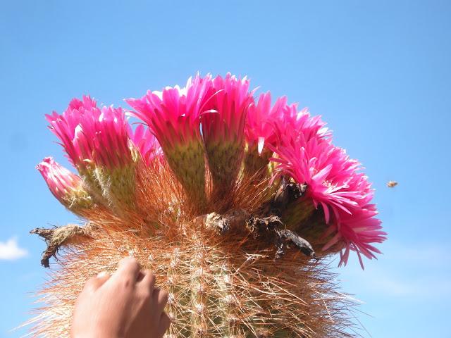Euch einen adventliche Blumengruß