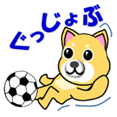 A shiba inu which plays soccer