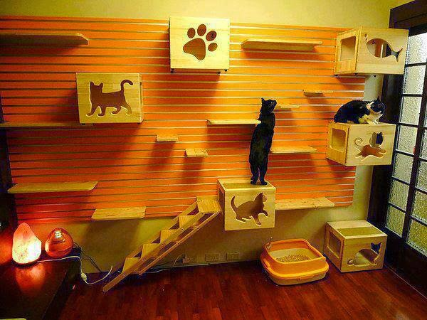 Cat Shelf