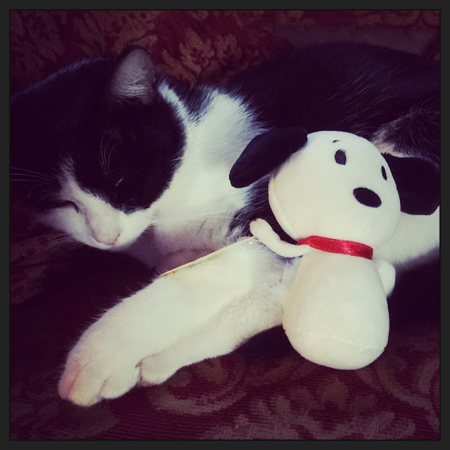 cat with Snoopy Itty Bitty