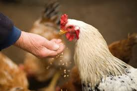 Image result for Animal Nutrition Chemicals