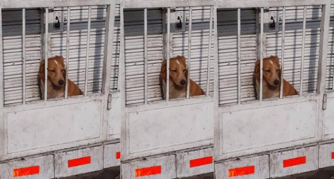 Desalmados encerraron a perro en reducido espacio para cuidar local de conocida pizzería  FOTO