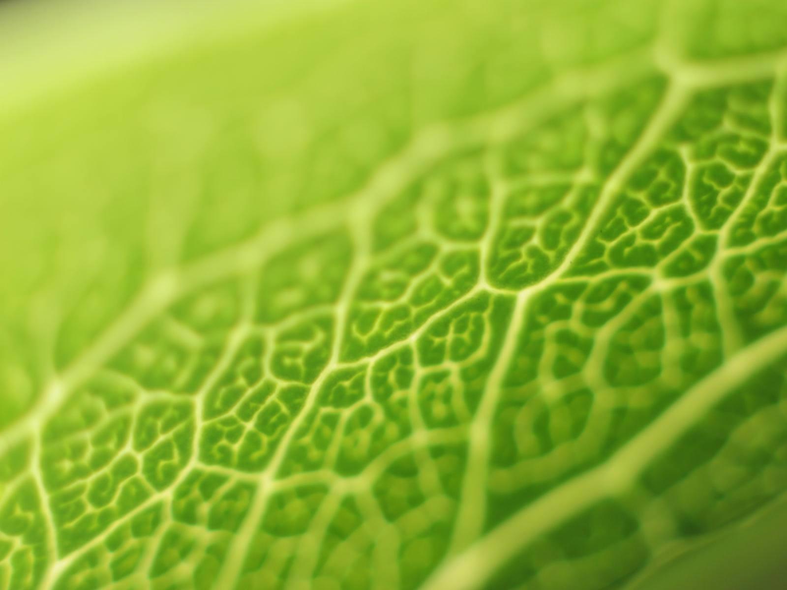 Ricardo Kaka Hd Wallpapers Wallpaper Green Theme
