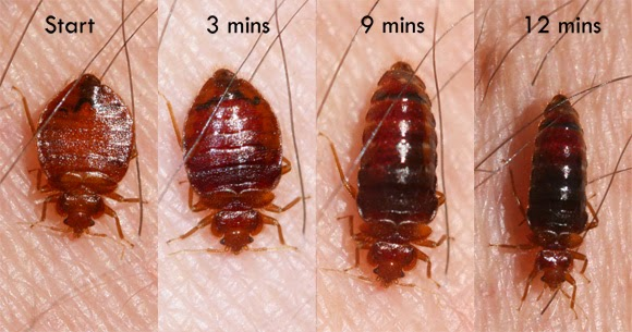 The Ultimate Guide To Bed Bug Bites Symptoms Treatments
