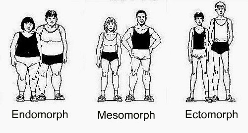 Human body types – Ectomorph, Mesomorph, Endomorph
