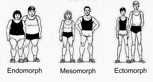Human body types – Ectomorph, Mesomorph, Endomorph