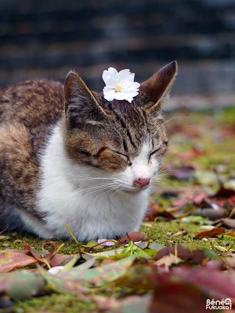 聖福寺の猫、福岡