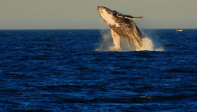 10 Things You Didn't Know About Whales