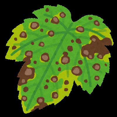 褐斑病のイラスト