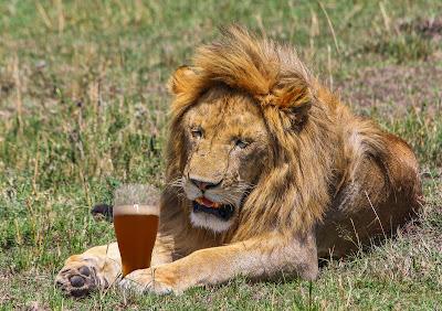 Resultado de imagem para lion drinking beer