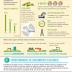 Infografía: las claves del crecimiento sostenible