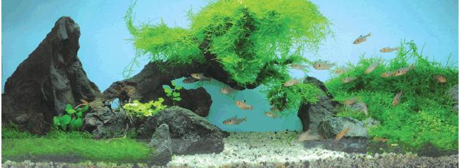 perawatan aquarium dan aquascape