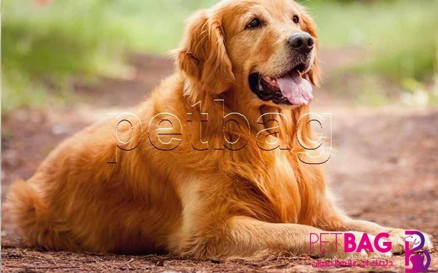 أذكى أنواع الكلاب في العالم
