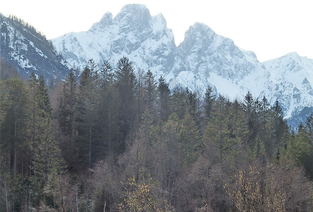 Catkins and snowy mountains make for a spring/winter contrast in Austria