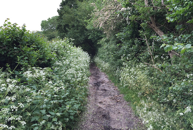 Path from Well Wood to Coney Hall.  2 June 2016.