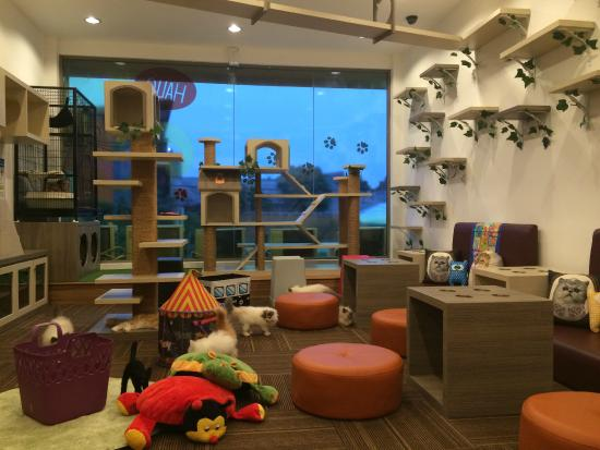 Popular Cat Cafes You Can Absolutely Visit In Jakarta