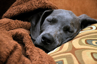 Let Sleeping Dogs Lie - It Helps Them Consolidate Memories