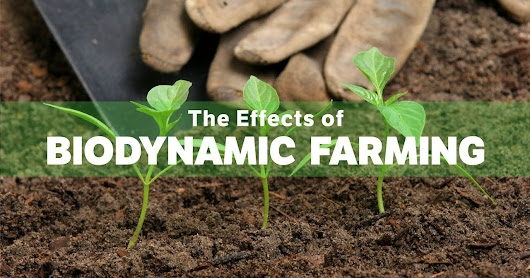 The most important things about biodynamic farming