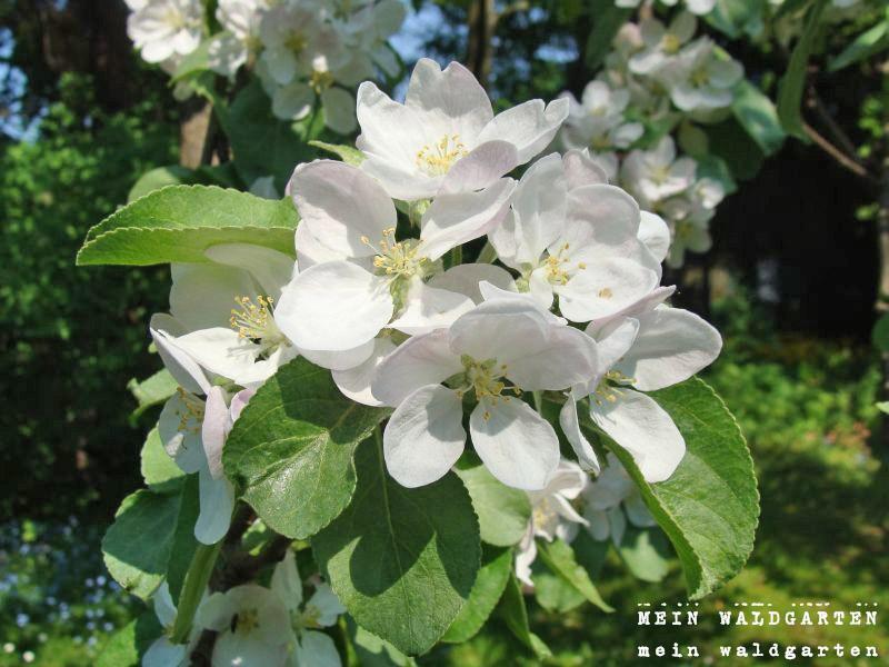 Mein Waldgarten: Pflanzenpflege Im April