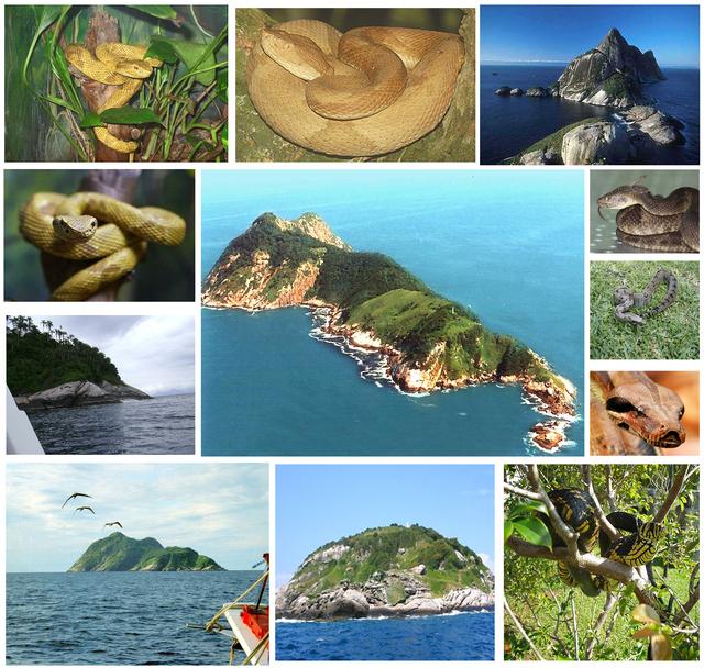 Ilha de Queimada Grande – Brasil