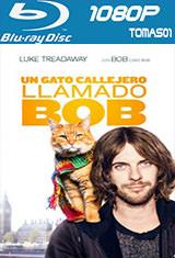 Un gato callejero llamado Bob (2016) BDRip 1080p DTS