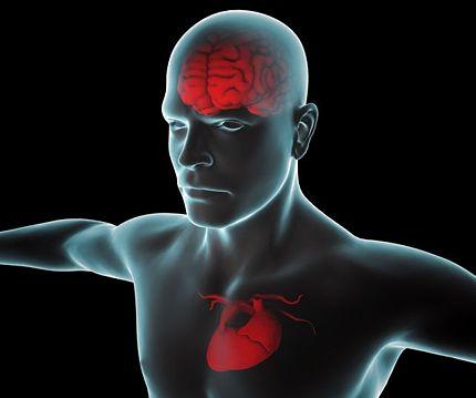 estrés infarto cardiovascular