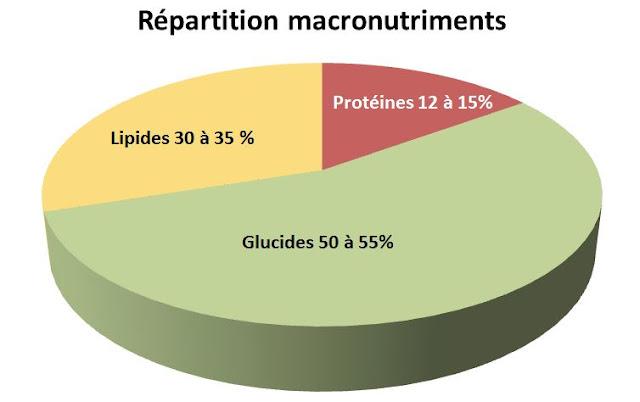 Apport journalier : Glucides - Lipides - Protides