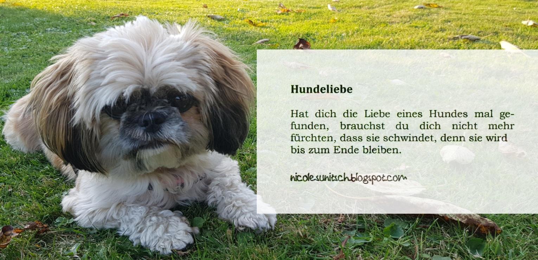 Gedichte von Nicole Sunitsch   Autorin : Sprüche   Hundeliebe aus