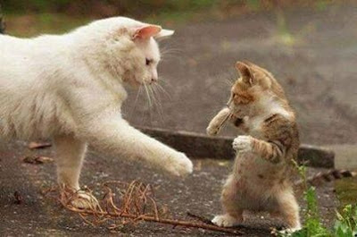 Fight like a man cats kitten