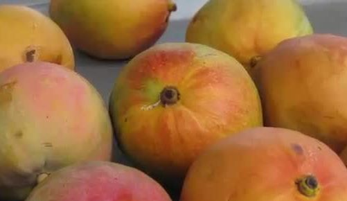12 MOST EXPENSIVE FRUITS IN THE WORLD Northern Territory Mangoes