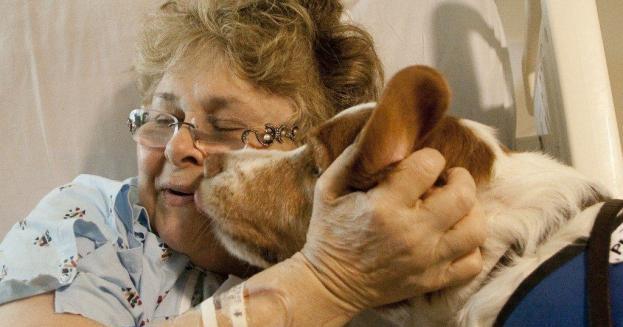 Το Στρατιωτικό Νοσοκομείο 424 ανοίγει τις πόρτες του στους σκύλους θεραπείας