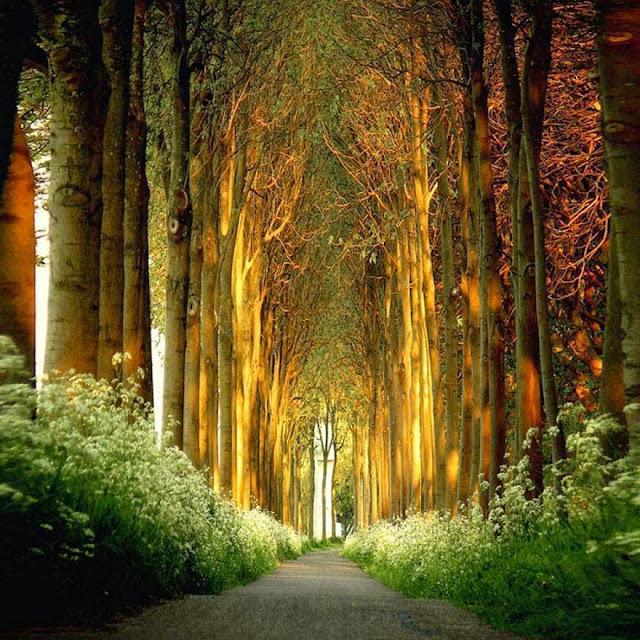 prelijepo šumsko područje