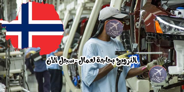 النرويج بحاجة الى عمال بسرعة في مختلف المجالات و كيفية التسجيل خطوة خطوة